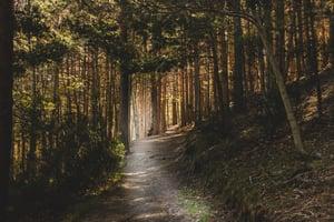 dark-path-forest