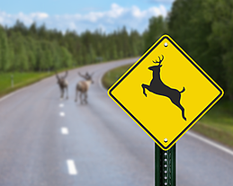 deer-crossing-sign